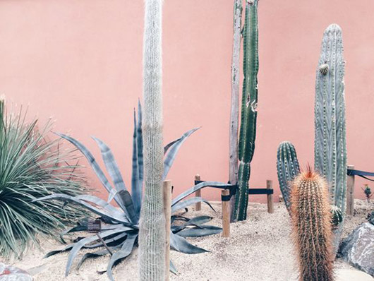 peachy pink walls and cacti. / sfgirlbybay