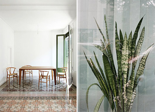 gorgeous tile floors and green snake plant. / sfgirlbybay