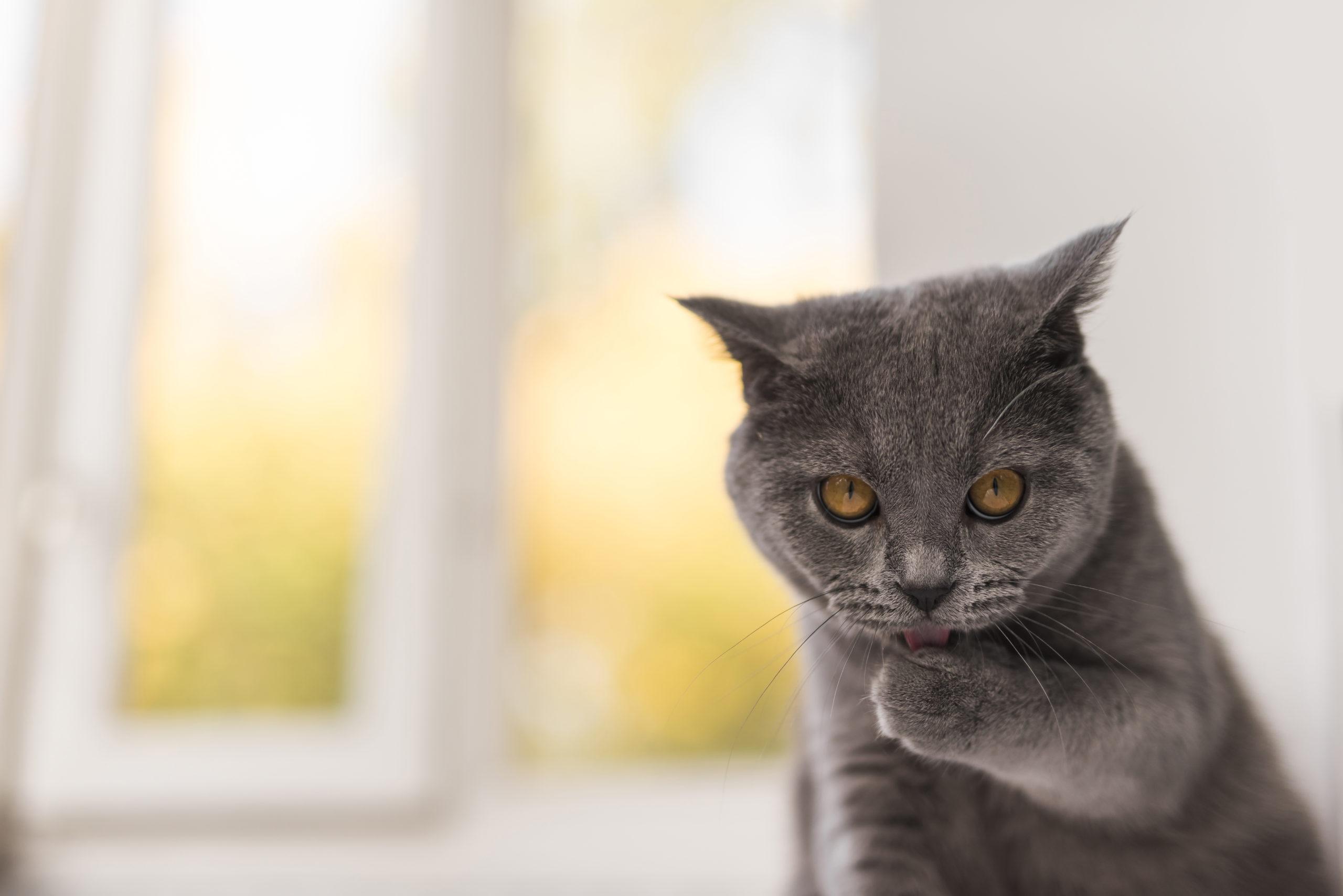 Curiosità sulle zampe dei gatti: 5 cose che non sapevi