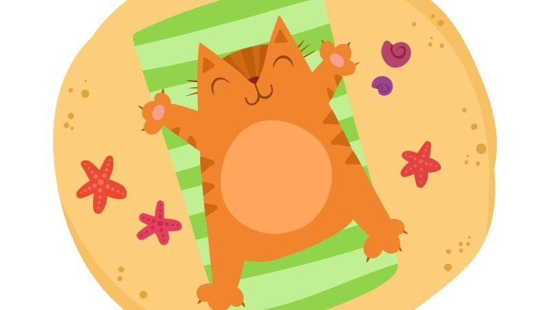 Portare il gatto in vacanza: consigli utili