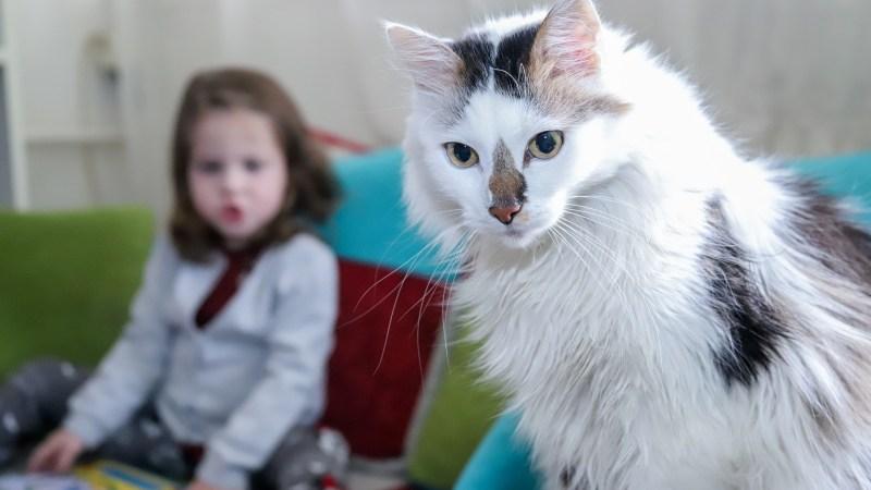 Giornata Internazionale del gatto: sfatiamo i miti