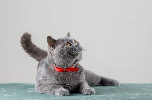 consigli per gatti sterilizzati