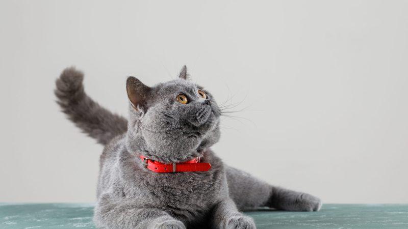 Gatti sterilizzati: 3 consigli per migliorare la loro salute
