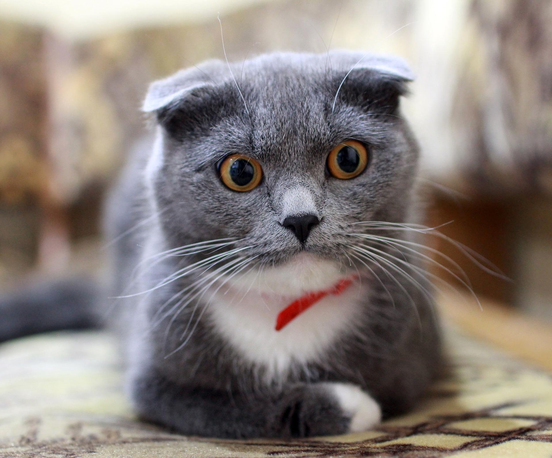 10 Cose da non fare al gatto: gli errori più comuni