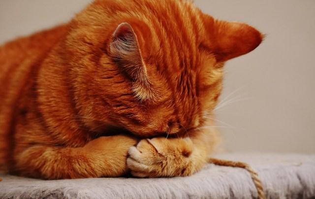 perchè il gatto non dorme di notte