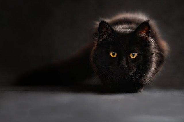 i gatti neri sono speciali