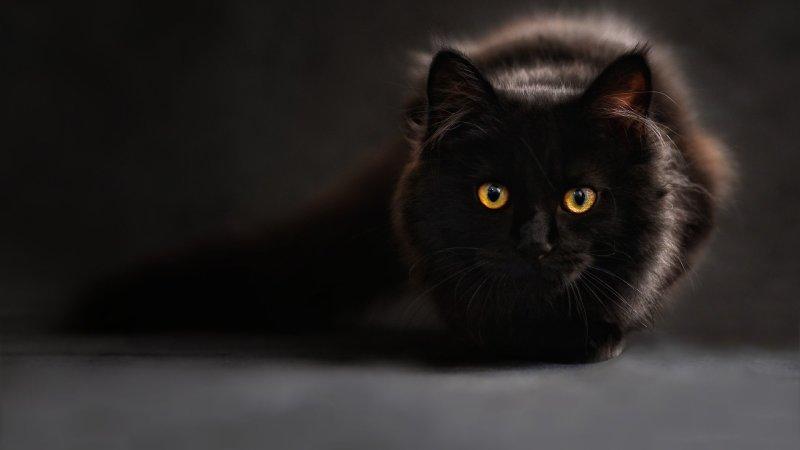 Perché i gatti neri sono speciali: alcune curiosità