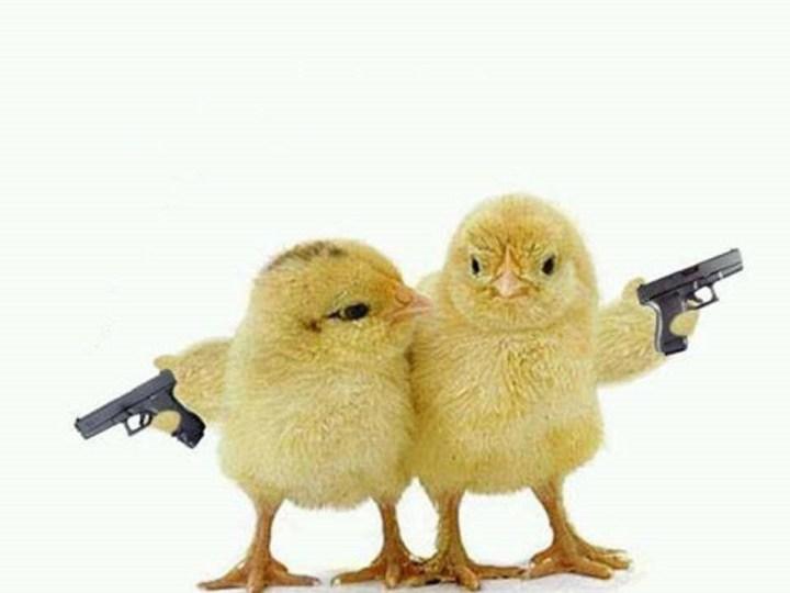 I meme sulle galline di Pordenone: l'Esercito fa strage di polli