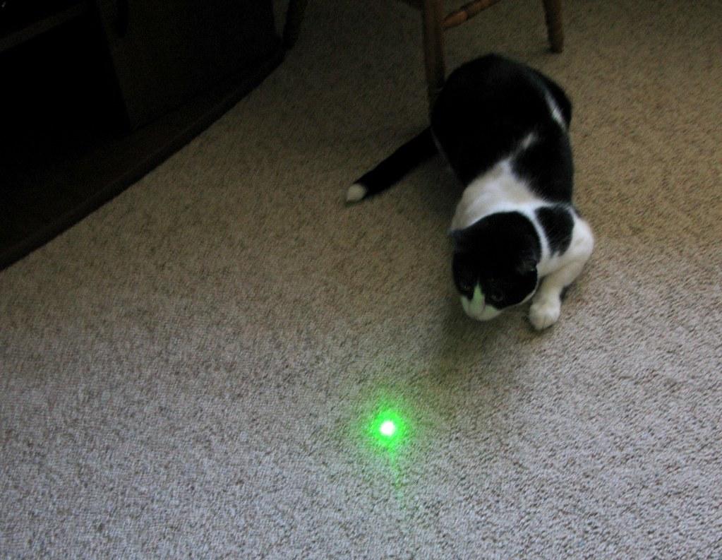perché ai gatti piace il laser