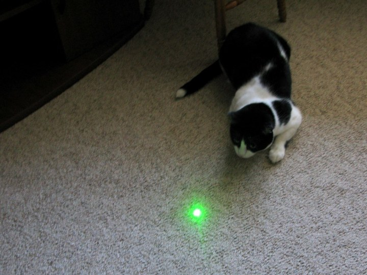 Perché ai gatti piace il laser? Consigli e rischi
