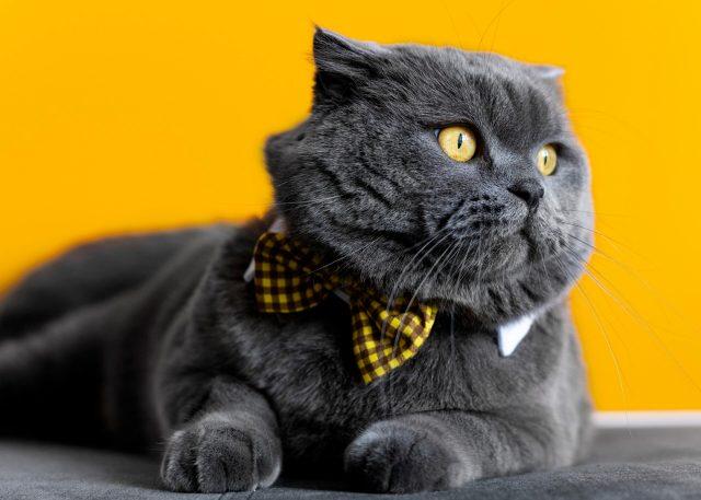 I 5 tipi di personalità dei gatti la scienza fa chiarezza