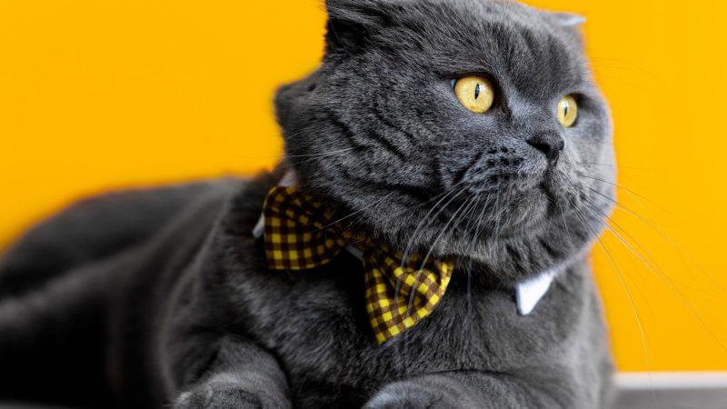 I 5 tipi di personalità dei gatti: la scienza fa chiarezza