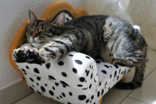 il gatto graffia il divano