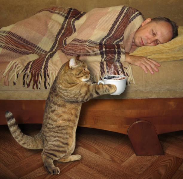il gatto si sveglia troppo presto