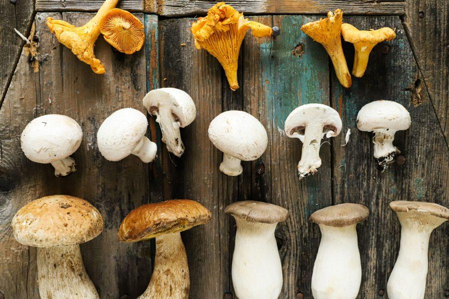 Spezzatino-di-vitello-con-funghi-porcini