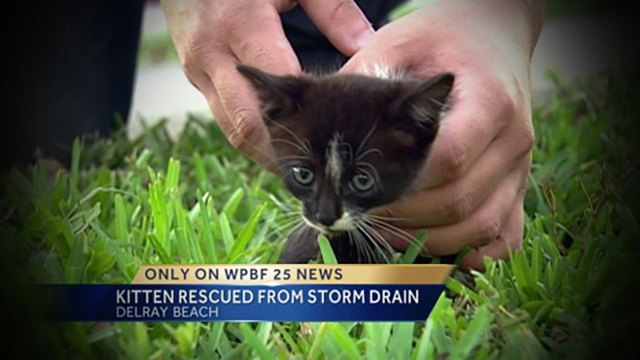 WPBF News 25 kitten rescue Randy Gyllenhaal