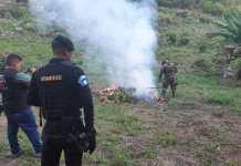 Incineración de matas de cocaína erradicadas