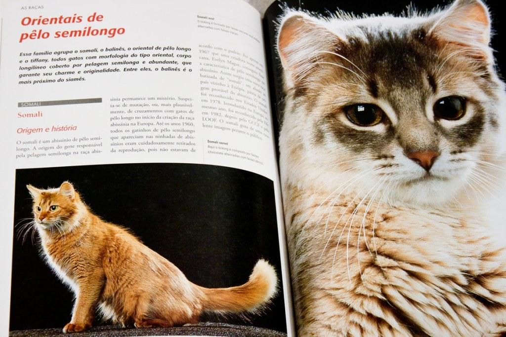 Diagramação do Livro Larousse dos Gatos.