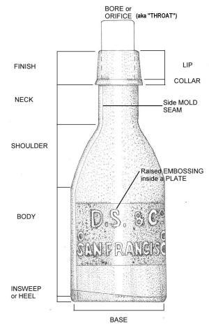 Bottle Morphology