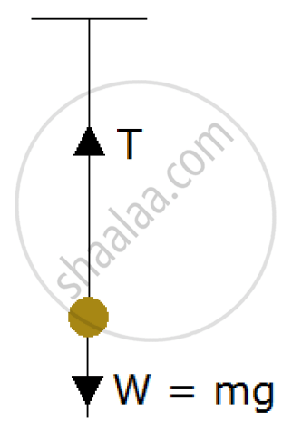 A Brass Ball is Hanging from a Stiff Cotton Thread. Draw a
