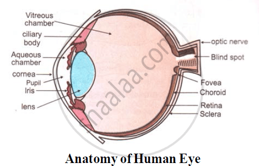 structure of human eye with diagram palm tree parts solution for draw labelled diagrams the following cbse 2
