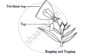 With the help of suitable diagram define 'bagging' and