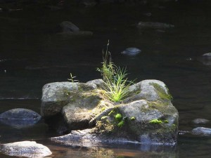 Boulder in the middle of the creek with moss and grass