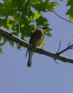 Close up of the bird