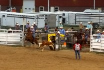 Team steer roping