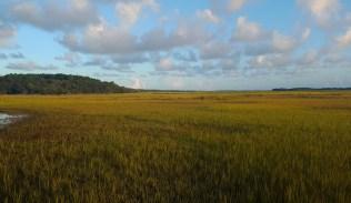 Salt Marsh Around James Island
