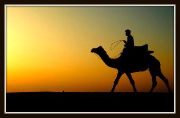 Thar_Camel