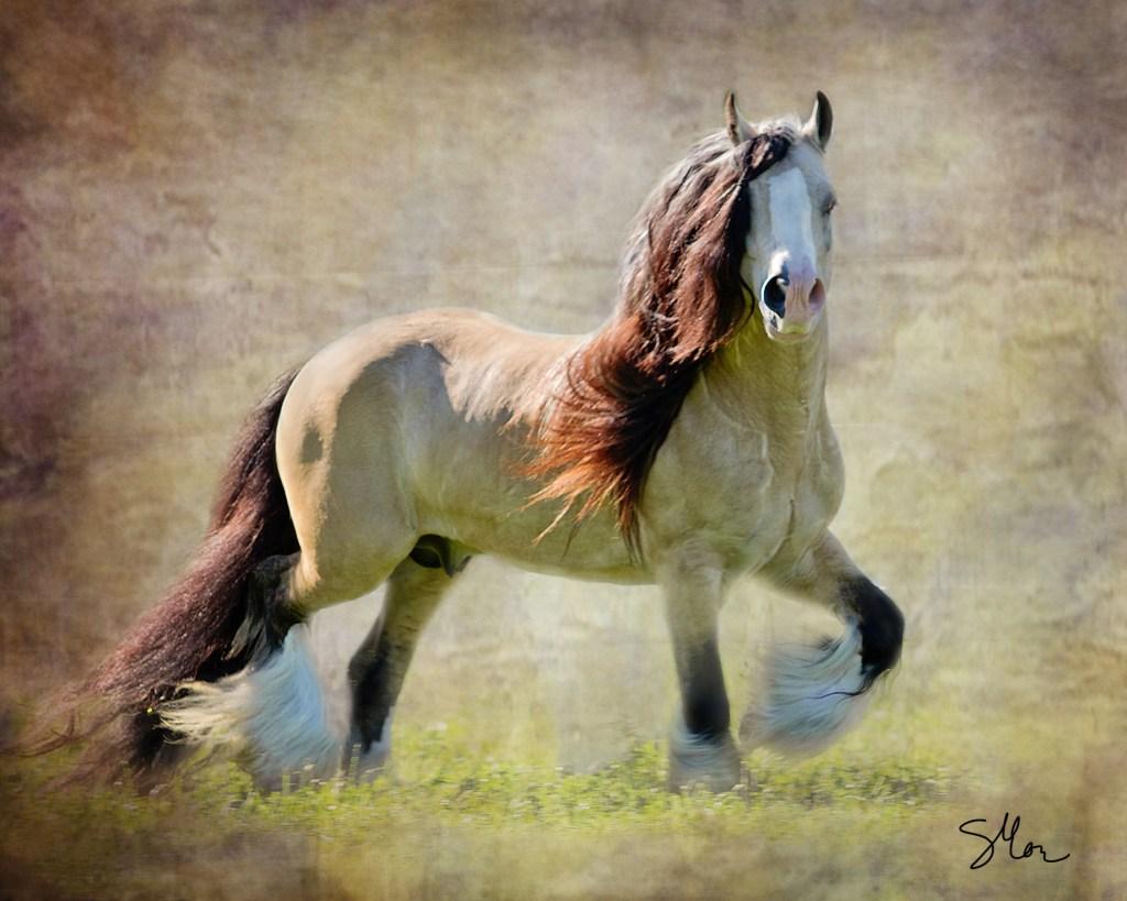 Segway - Gypsy Vanner Stallion