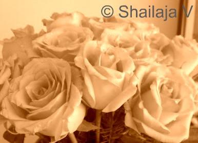 Photo copyright: Shailaja V