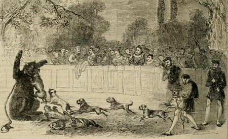 Elizabethan bear-baiting. From Cassell History of England, Vol. 2.
