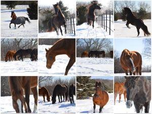 LifeStriders Horses