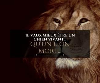 Il vaut mieux être un chien vivant qu'un lion mort...