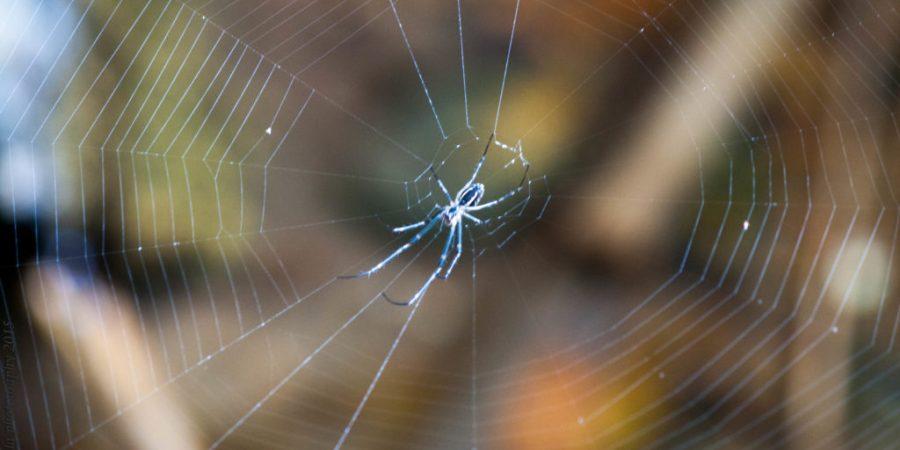 life-spider-web-blogstars-blogchatter