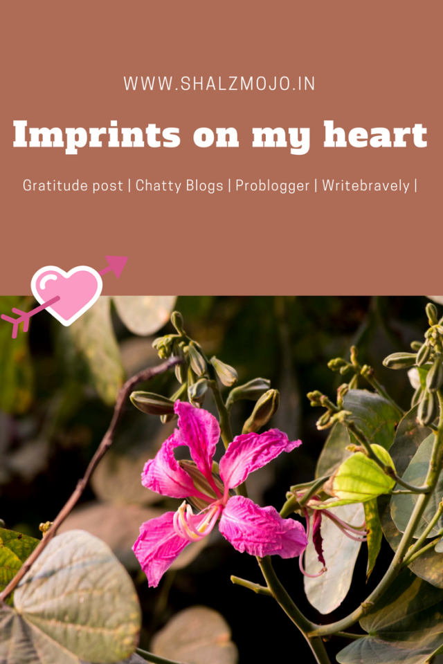 Kachnar-pink-blooms-winters-delhi-gurgaon-photography-writing-blogging-write-bravely-problogger-imprints-heartprints-gratitude-chatty-blogs-shalzmojosays-mindfulness-meditation-love-heart