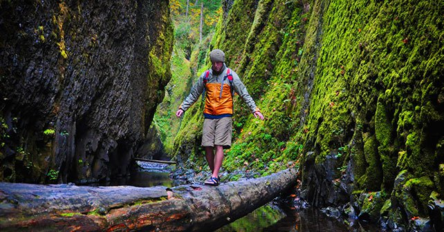 Patiently walking over a fallen log over a river.