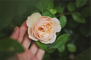 hand touching rose spirit