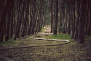 Caminho de cobra de madeira