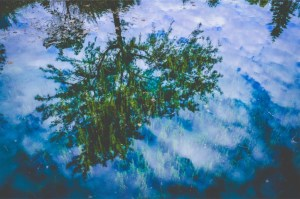 tree reflect in water
