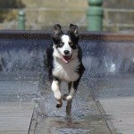 dog running speed on water