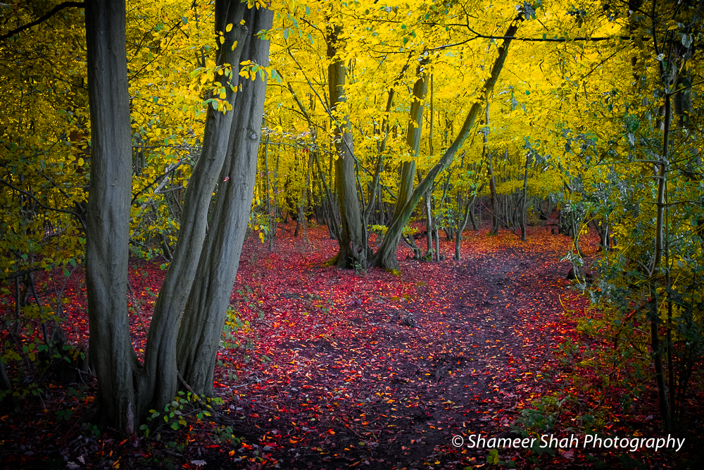 Mellow – Limited Edition Autumn Series