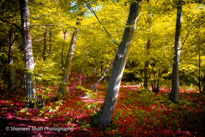Cheerful – Limited Edition Autumn Series