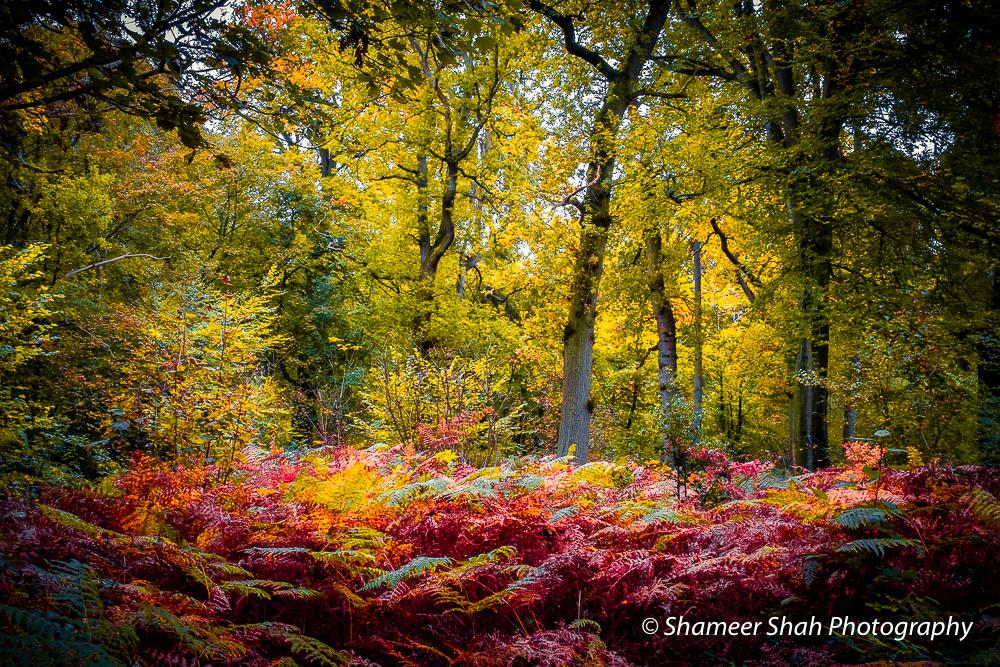 Seasoned - Limited Edition Autumn Series
