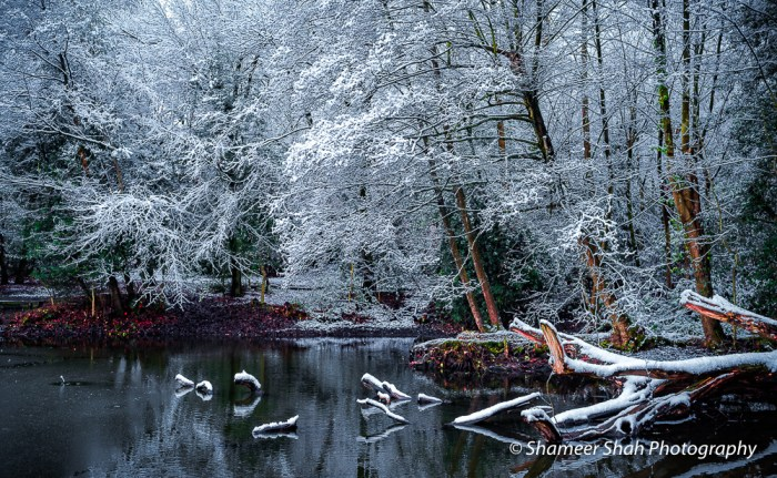 Winter photography of woodlands