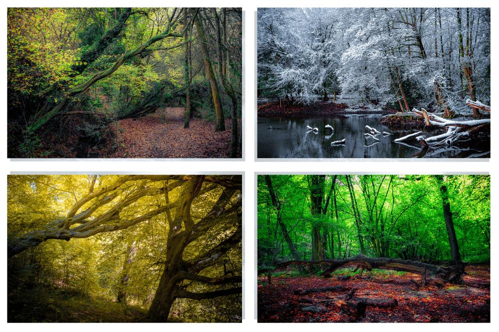 British nature photography