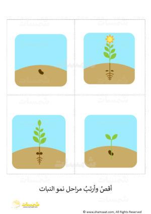 موضوع علوم للاطفال مراحل نمو النبات شمسات
