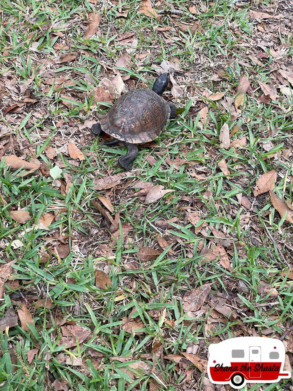 Bayou-Turtle-at-Gulf-Island-National-Seashore